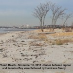 Plumb Beach - Dunes between lagoon and Jamaica Bay were flattened by Hurricane Sandy 11-16-12 © Ron Bourque