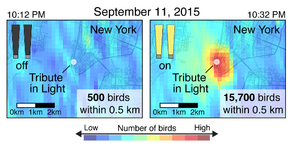 "Images above were taken 20 minutes apart during the 2015 Tribute in Light and show concentrations of birds on radar with light beams turned off (left) and turned on (right). Figure adapted from ""High-intensity urban light installation dramatically alters nocturnal bird migration"" in Proceedings of the National Academy of Sciences, September 2017."